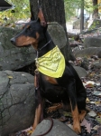 Ficka-Caleb's Reckoning is working obedience and agility with owner Karen Lessie